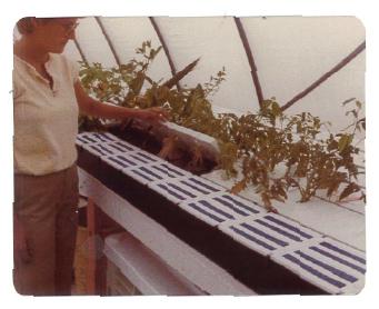 Greenhouse-Worker