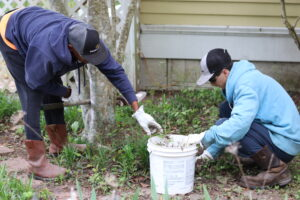 New-Ventures-Lawncare-Weed Removal
